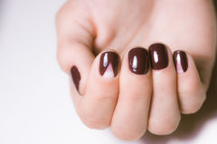 Beautiful female hands with bright manicure. Nails covered with nail Stock Image