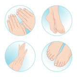 Beautiful female hands and feet, manicure and pedicure. Body care set design vector illustration Stock Image