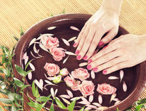 Beautiful female hands with flowers and petals Stock Images