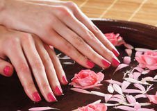 Beautiful pink roses held in female hands Royalty Free Stock Photography
