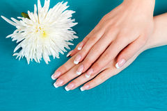 Beautiful female hands with french manicure Stock Photography