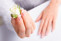 Beautiful female hands with french manicure. Beautiful female hands with french manicure holding white rose royalty free stock images