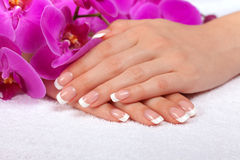 Beautiful female hands with french manicure Stock Image