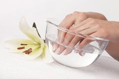 Beautiful female hands with french manicure royalty free stock photo