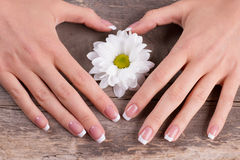 Beautiful female hands with french manicure and white daisies. Stock Photography