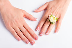 Beautiful female hands with french moon manicure. Beautiful female hands with french moon manicure on a white background. Manicured hands with white rose stock image
