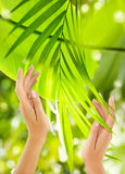 Beautiful Female Hands on the green background. Of a tropical leaves on background Royalty Free Stock Photo