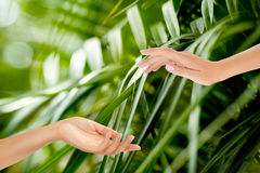 Beautiful Female Hands. On the green background of a tropical forest's leaves Stock Photo
