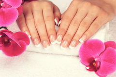 Beautiful female hands with perfect french manicure. On white towel near orchid flower royalty free stock image