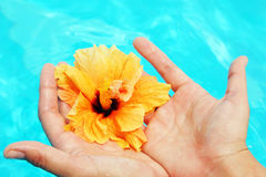 Beautiful female hands in the pool Royalty Free Stock Photos