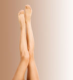 Beautiful female legs on brown Stock Images