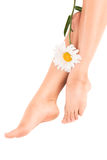 Beautiful female legs with flower Stock Image
