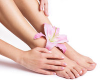 Beautiful female legs and hands with flower Royalty Free Stock Photos