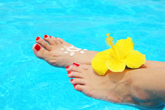 Beautiful female legs in the pool Stock Image
