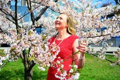 Beautiful female posing in the sakura garden Stock Photos