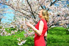 Beautiful female posing in the sakura garden Royalty Free Stock Image