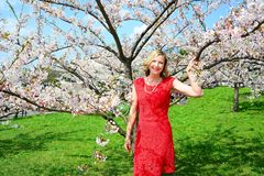 Beautiful female posing in the sakura garden Stock Photos