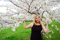 Beautiful female posing in the sakura garden Stock Photography