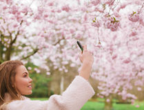 Beautiful female shooting blossom flowers with her mobile phone. Attractive young woman taking pictures of pink blossom flowers at a spring blossom park Stock Images