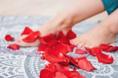 Beautiful female tanned legs with pink pedicure among rose petals, close-up, focus on petal. Spa woman care foot feet beauty skin healthy background stock photography