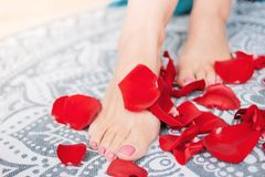 Beautiful female tanned legs with pink pedicure among rose petals, close-up. Spa woman care foot feet beauty skin healthy background menstruation flower royalty free stock images