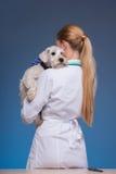 Beautiful female vet holding cute dog Royalty Free Stock Photo