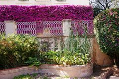 A beautiful fence of flowering spring flowers in the park of Barcelona royalty free stock images