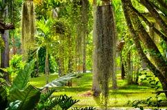 Beautiful fern in garden Royalty Free Stock Photography
