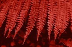 Beautiful fern leaves background vector illustration