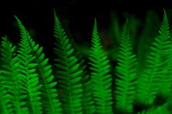 Beautiful fern leaves background stock image