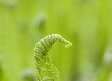 Beautiful fern at the meadow Royalty Free Stock Photography