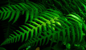 Beautiful ferns. Ferns arranged by nature. Symmetry. A nature view stock photo