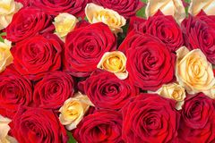 Beautiful festive background of bouquet red and yellow rose flow Royalty Free Stock Image