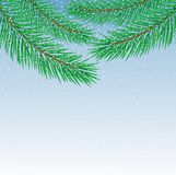 Beautiful festive background with spruce branches. Illustration Stock Photo