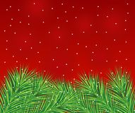 Beautiful festive background with spruce branches Stock Photography