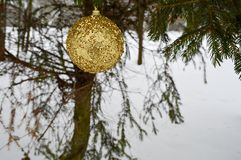 Beautiful festive elegant yellow, golden round balls, Christmas decorations for the new year, Christmas hanging on fir branches royalty free stock images