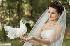 Beautiful fiancee. Horizontal wedding portrait beautiful  fiancee in white dress with white  pigeon, on nature Royalty Free Stock Photo