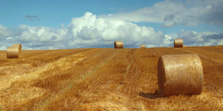 Beautiful field. Straw bales on the field against sky royalty free stock photo