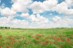 Beautiful  field and blue cloudy sky Stock Photos