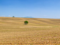 Beautiful field and blue sky Royalty Free Stock Photo