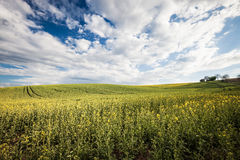 Beautiful field and cloudy sky Stock Photos