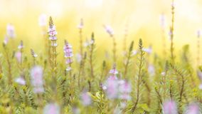 Beautiful field of flowers stock photography