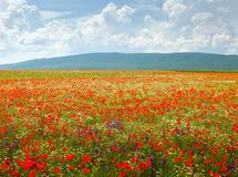 Beautiful field. Of flowers on a background of mountains and clouds Stock Photo