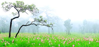 A beautiful field of flowers. A beautiful Fields of flowers,Krachiao field in Sai Thong National Park Stock Photos
