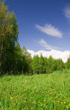 Beautiful field, forest and sky. Beautiful green field, forest and deep blue sky Stock Photo