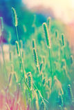 Beautiful field of grass Royalty Free Stock Photos
