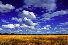 Beautiful field Royalty Free Stock Photography
