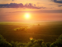 Beautiful field landscape on the sunset Royalty Free Stock Photo