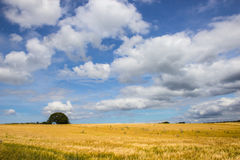 Beautiful field and meadow Stock Photography