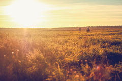 Beautiful field meadow the sun is shining the grass is green the sunset Royalty Free Stock Photography
